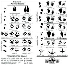 identify animal tracks around the farm