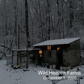 Chicken coop in winter weather